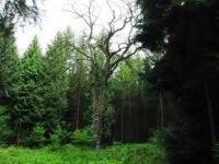 Reichswald_Kleve.jpg